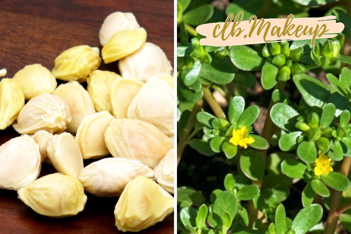 Tinh chất hạt bưởi và rau sam là 2 thành phần chính có trong toner Muij
