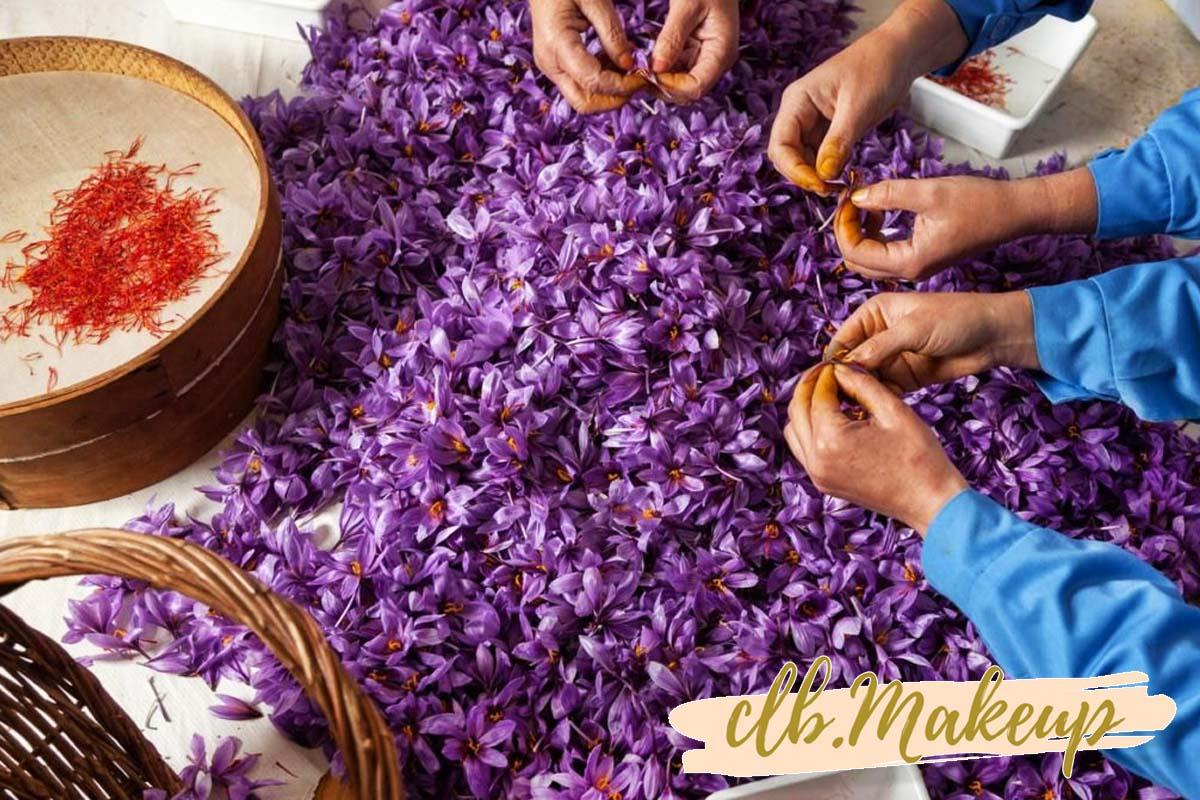 Trong các loại saffron thì saffron organic là loại được trồng và thu hoạch cầu kỳ, khắt khe nhất